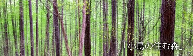 小鳥の住む森