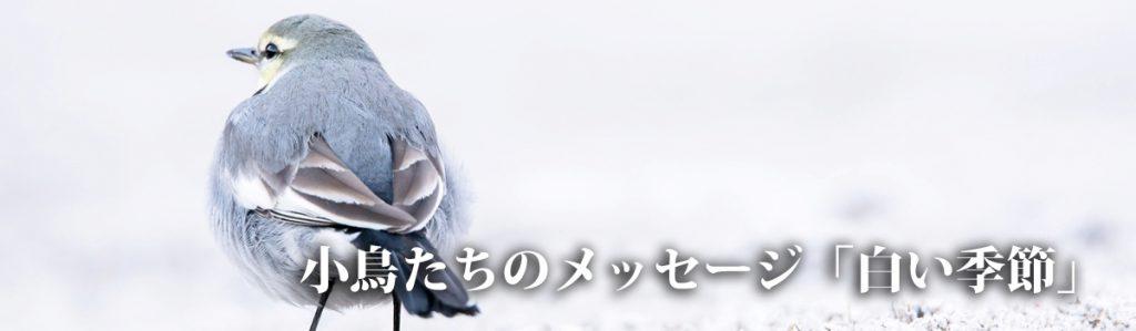 白い季節_